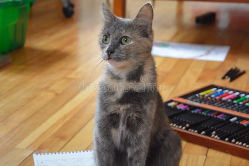 Curious cat stock photos