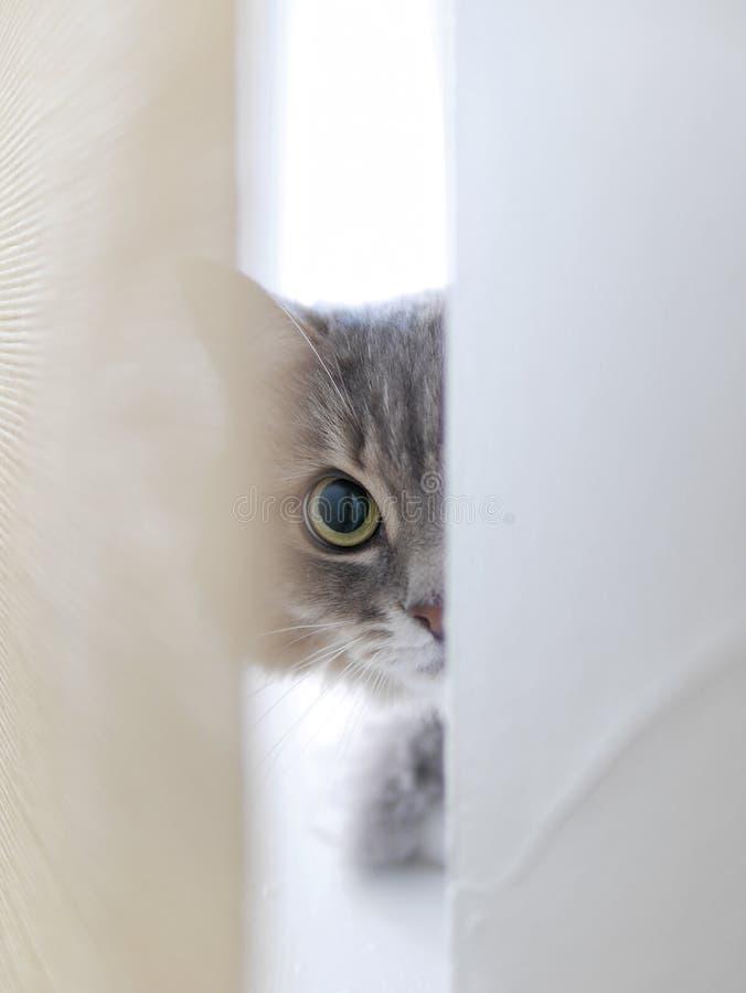 Curious catty royalty free stock photos