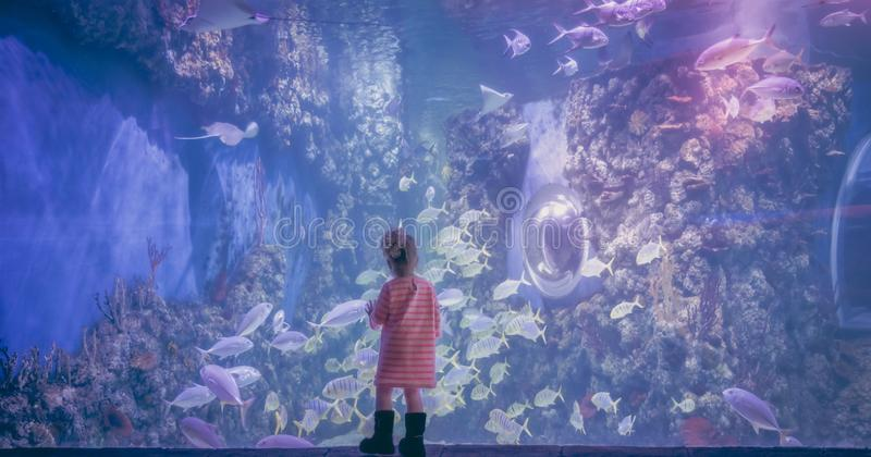 Curious child contemplation underwater landscape in marine aquarium in deep blue purple pink color concept children curiosity and stock photography