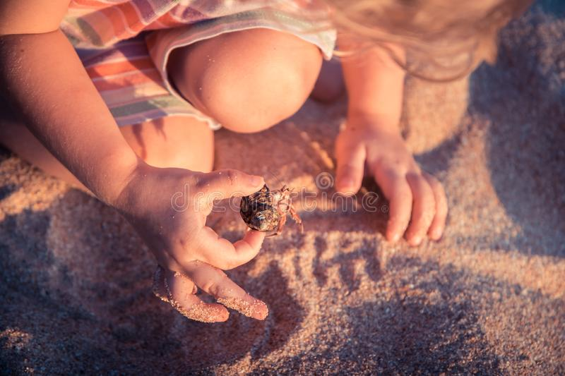 Curious child toddler playing on beach with hermit crab during summer vacation concept childhood curiosity lifestyle. Curious child toddler playing on beach with stock photography