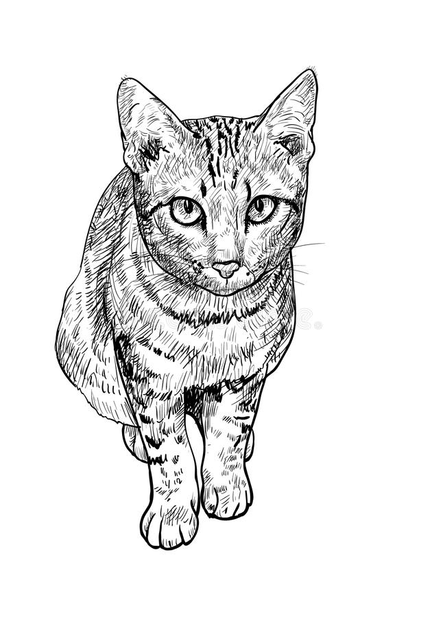 Curious Cute Cat Stock Vector Illustration Of White