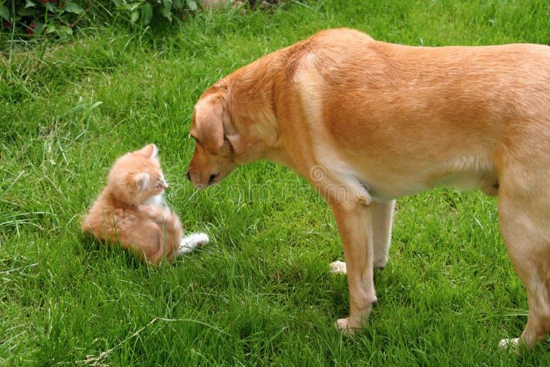Curious Dog and Cat royalty free stock photos