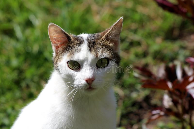 Curious domestic white cat with small grey patch on top of head and green eyes looking directly at camera posing for picture. Surrounded with plants and leaves stock photo