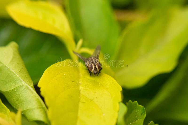 A curious fly at the garden. A lost fly in the garden looking for something special in the plants stock images