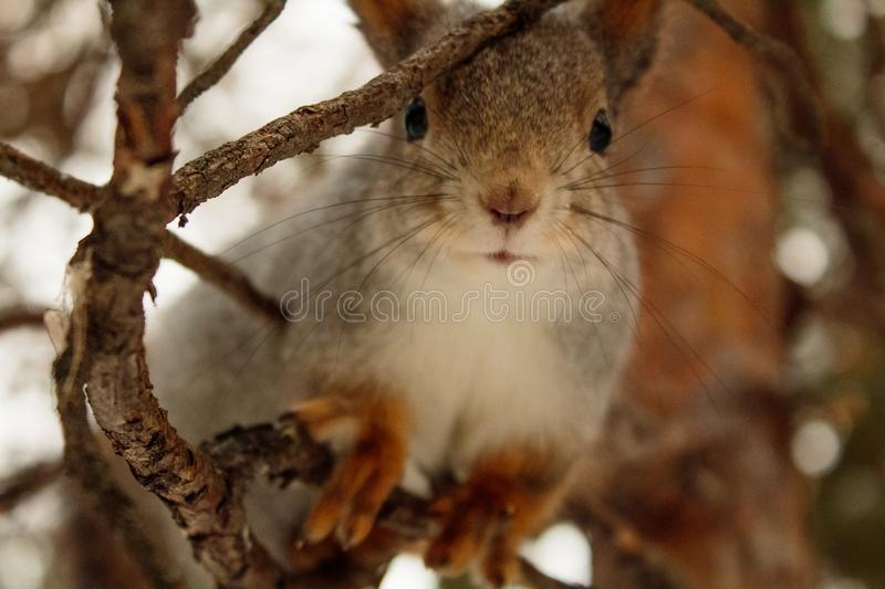 curious forest beauty lover posing stock photography