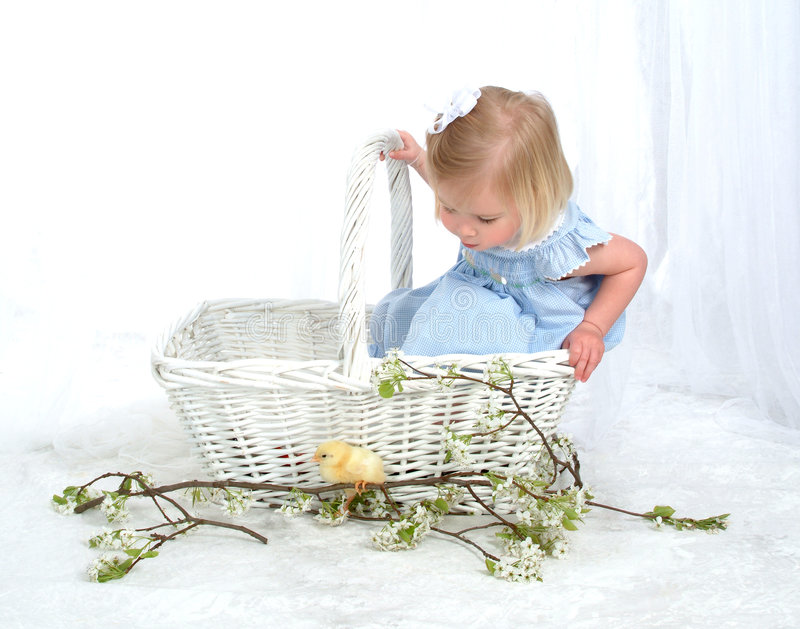 Curious Girl in Basket with Chicken. Girl in blue sitting in basket looking at chicken in front of white background royalty free stock images