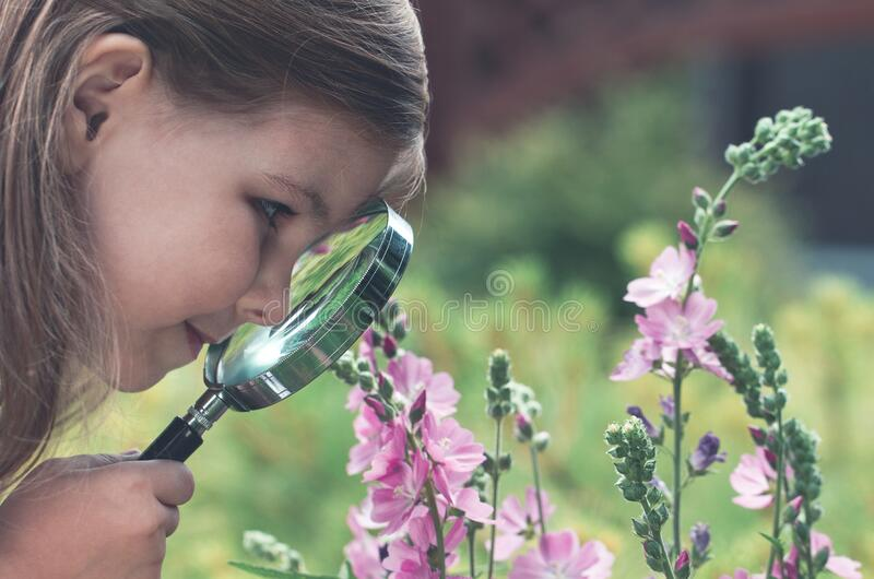 Curious girl exploring flowers with magnifying glass. Crop side view of little girl looking at field flower through magnifying glass exploring wild nature royalty free stock images