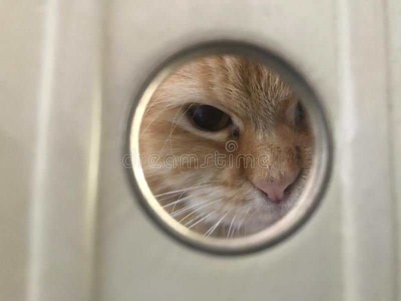 Curious cat looking inside a peephole royalty free stock images