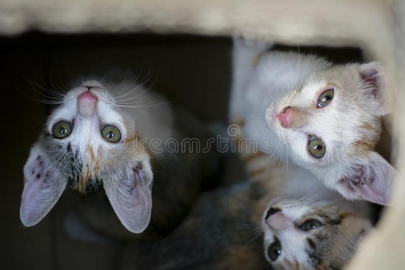 Curious group of cute small domestic kitty cats in brown paper b. Ox there are look like they stay in the hole or black space stock photography
