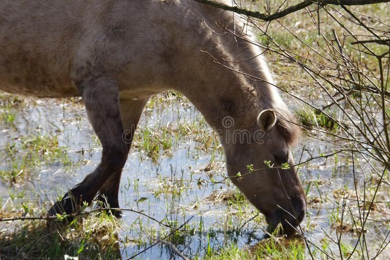 Horse in the meadow stock photography