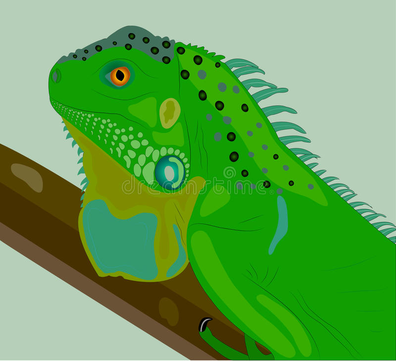 Download The Curious Iguana On A Branch. Stock Vector - Illustration: 22840979