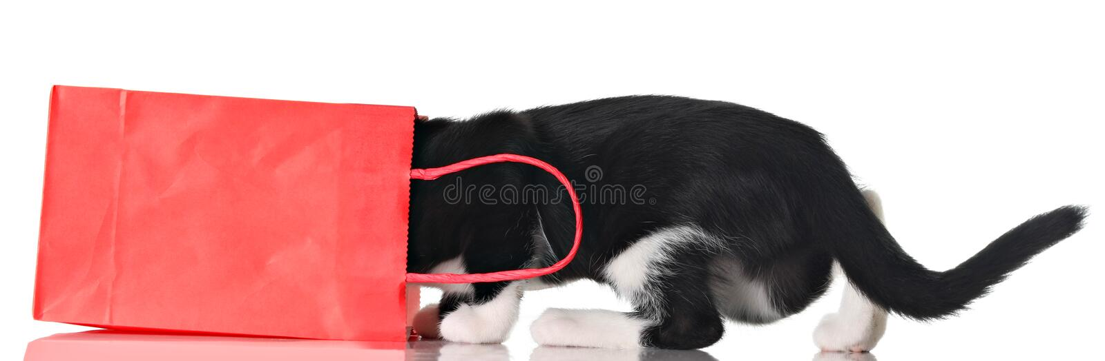 Curious kitten royalty free stock images