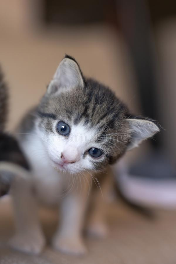 Curious kitten looking at the camera royalty free stock photos