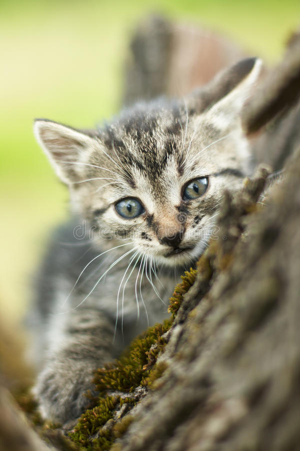 Curious little cute cat. On the tree royalty free stock photo