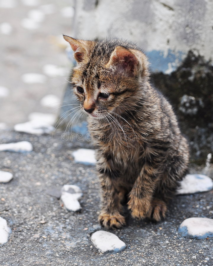 Curious little kitten royalty free stock image