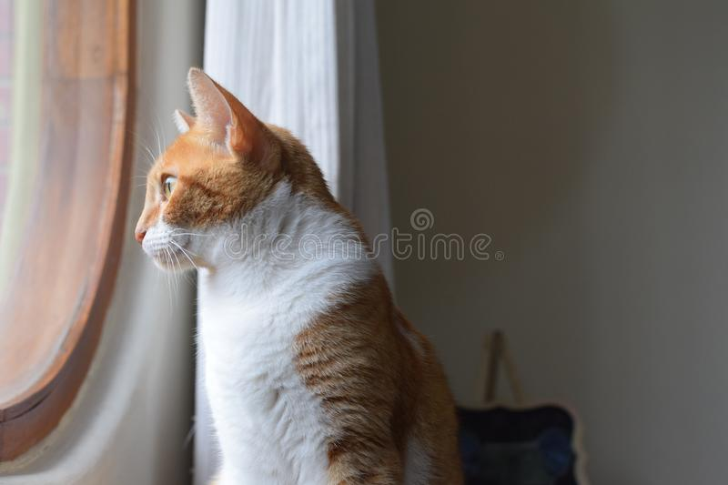 Curious look of a cute kitten 1 stock photo