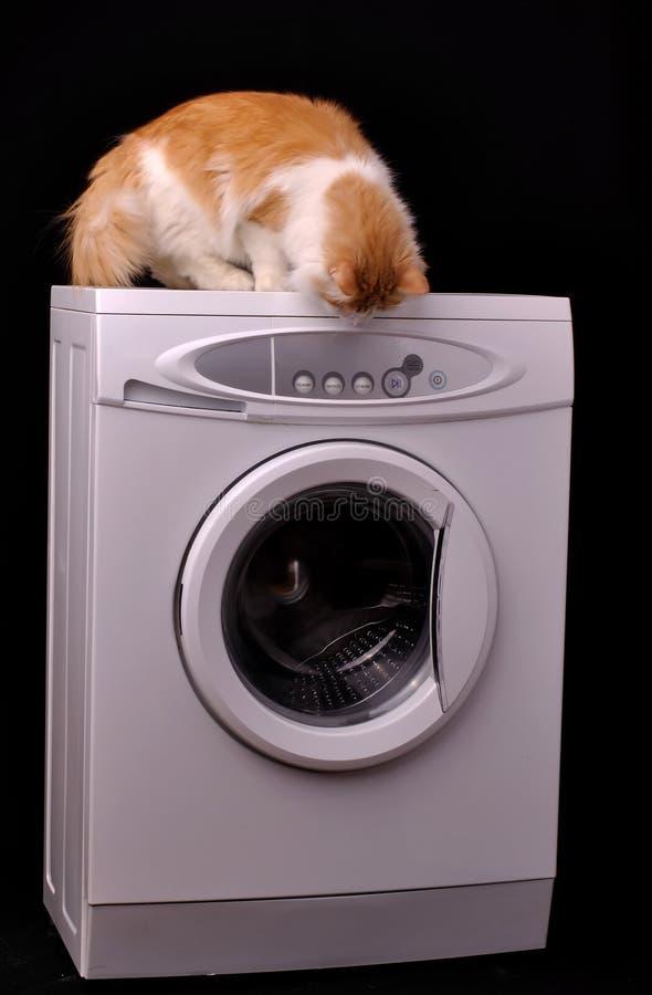 Curious pet royalty free stock photo