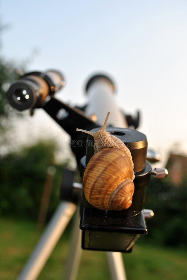 Curious snail on the telescope