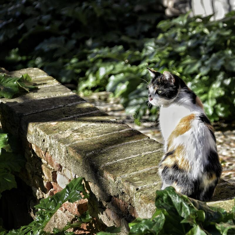 Curious stray cat sunbathing in a park.  royalty free stock images