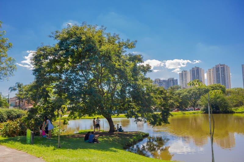 CURITIBA BRASILIEN - MAJ 12, 2016: folket som tycker om skuggan av ett stort träd bredvid en sjö i det botaniskt, parkerar av royaltyfria bilder