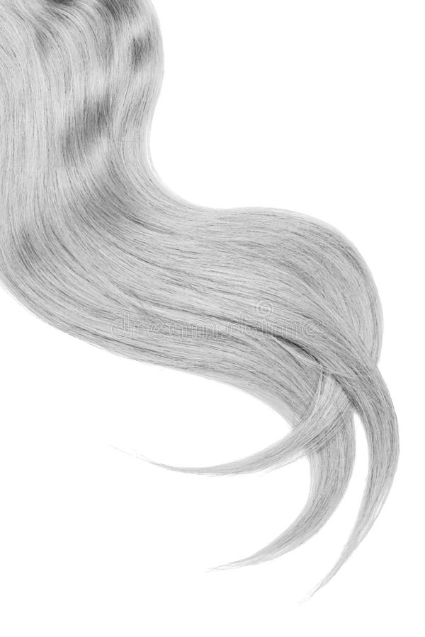 Curl of natural gray hair on white background. Wavy ponytail stock image