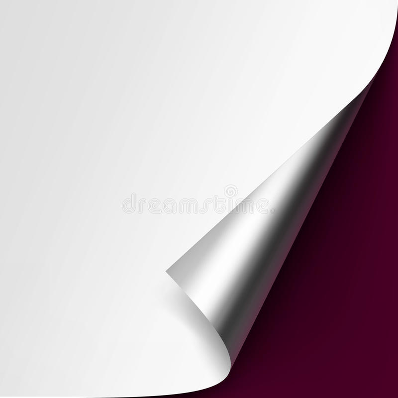Curled Metalic corner of White paper on Background. Vector Curled Metalic Silver corner of White paper with shadow Mock up Close up Isolated on Vinous Background vector illustration