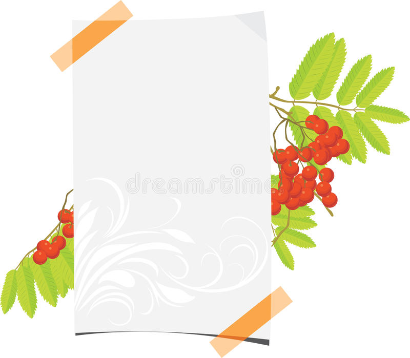 Download Curled Paper Sheet With Rowan Branch Stock Vector - Illustration of nature, leaves: 26146946