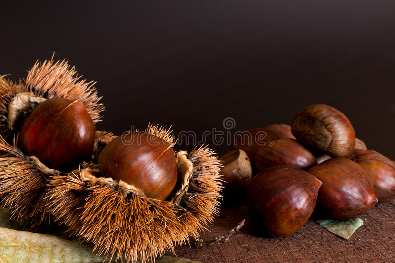 Curly chestnut stock image