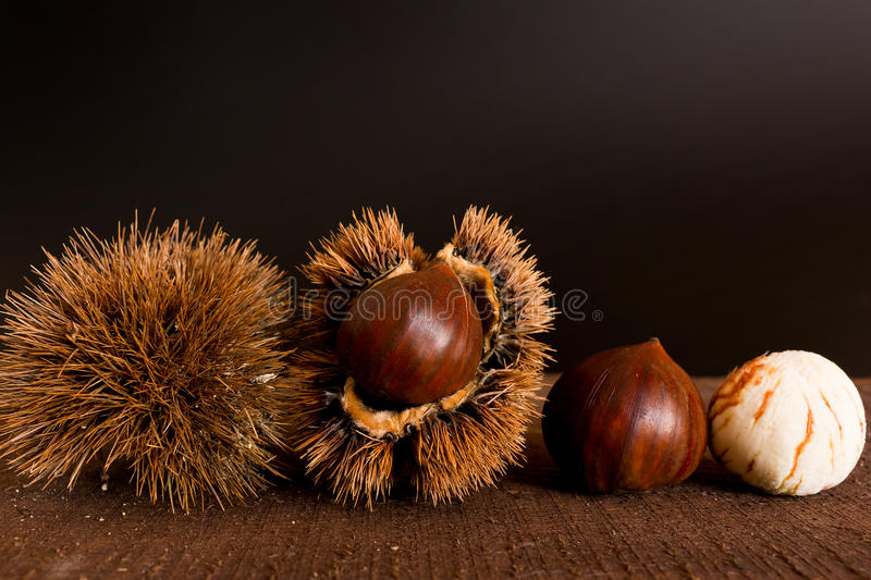 Curly chestnut royalty free stock photos