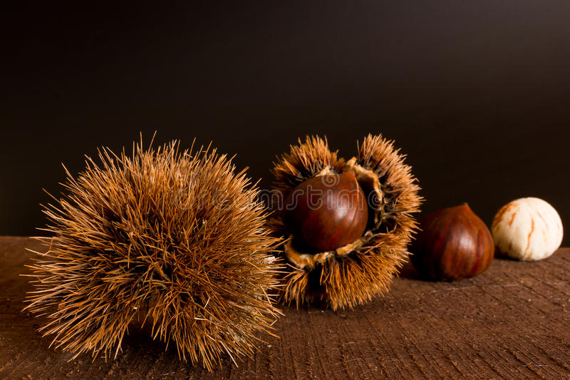 Curly chestnut royalty free stock image