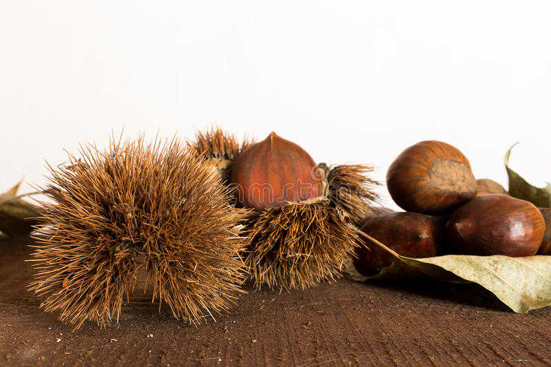 Curly chestnut stock photo