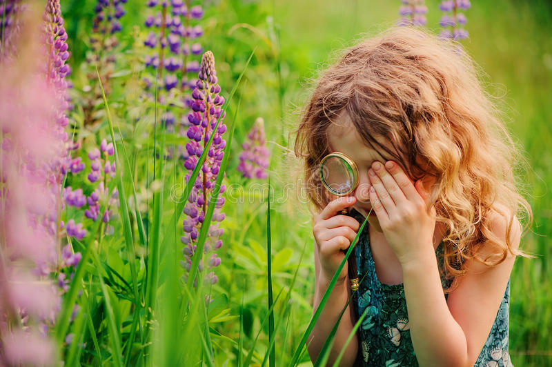 Curly child girl exploring nature with loupe on summer walk on lupin field royalty free stock photography