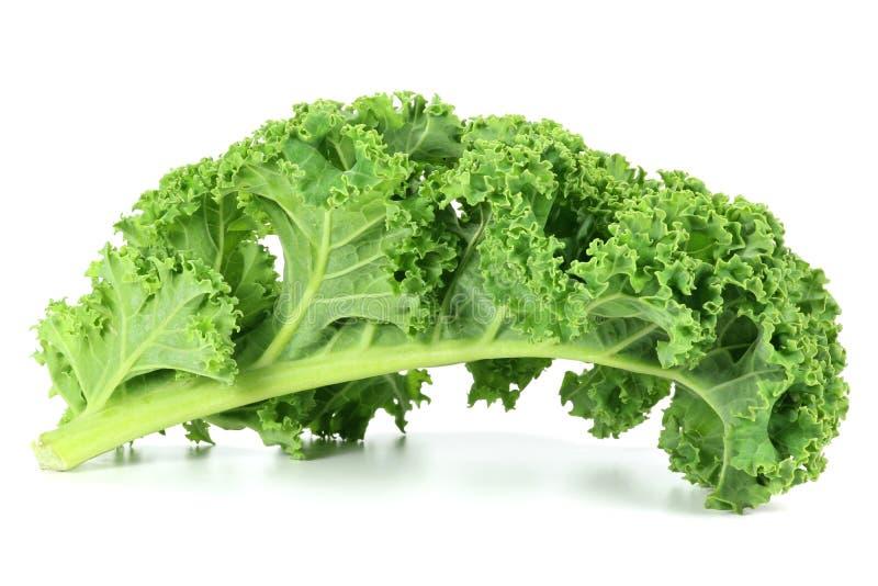 Curly kale. Isolated on white background stock photos