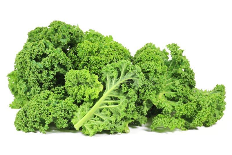 Curly kale. Isolated on white background royalty free stock image