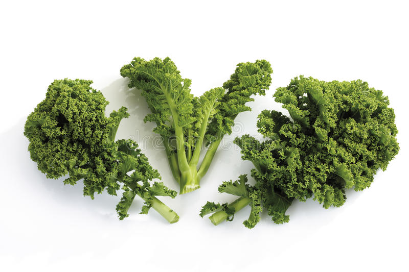 Curly-leaf kale stock photography