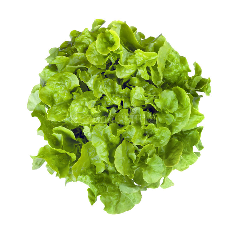 Download Curly Leaf Lettuce Isolated Stock Image - Image: 30642707