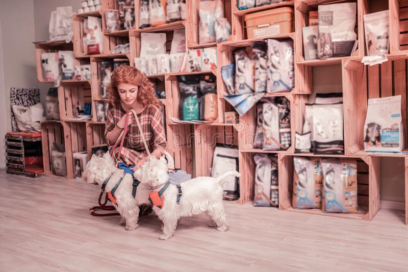 Curly red-haired woman holding her two cute dogs on dog lead stock photos