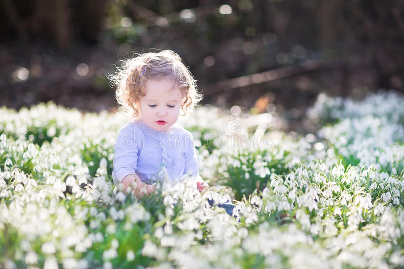 Curly toddler girl playing with first spring flowers stock photo