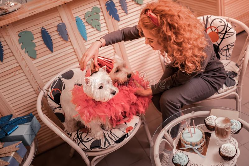 Curly woman with brassy hair decorating her cute dogs stock photos