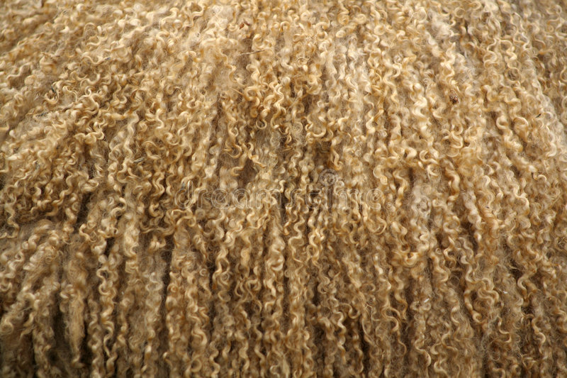 Download Curly Wool stock image. Image of carpet, garments, clothing - 821331