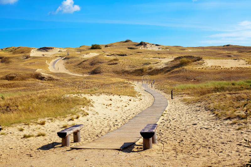 Curonian Spit, Lithuania. Nature reserve with dried grass and sand dunes in Curonian Spit, Lithuania royalty free stock images