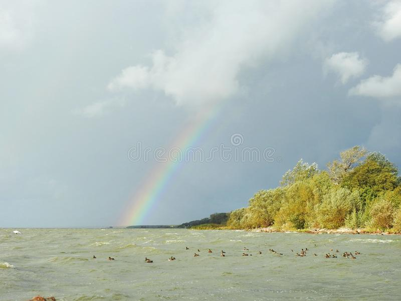 Curonian spit, rainbow and birds windy day, Lithuania. Curonian spit, trees, birds and rainbow windy day stock image