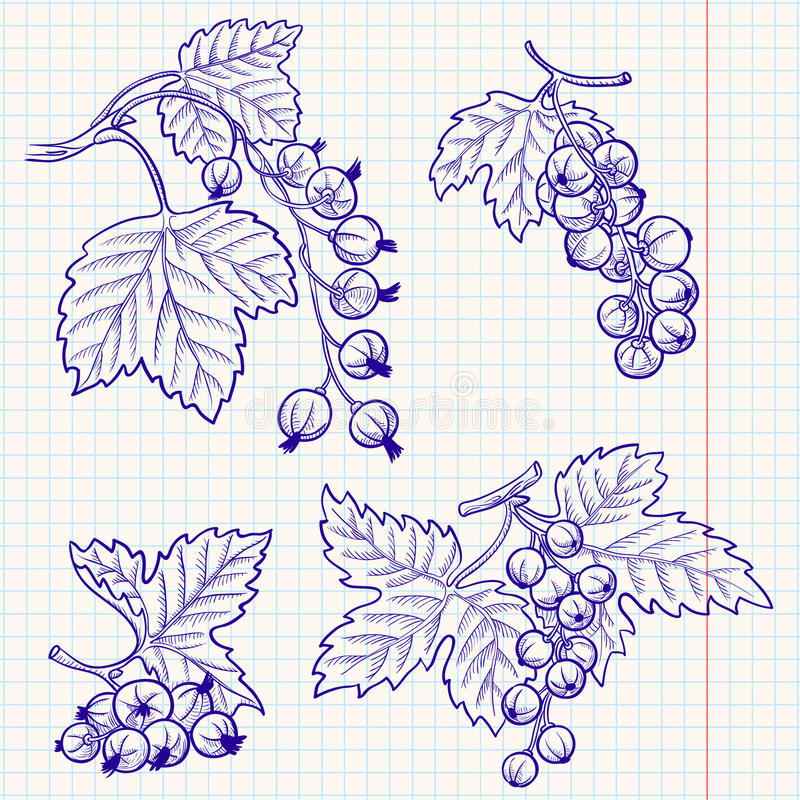 Download Currant stock vector. Illustration of doodle, berry, botany - 14865462