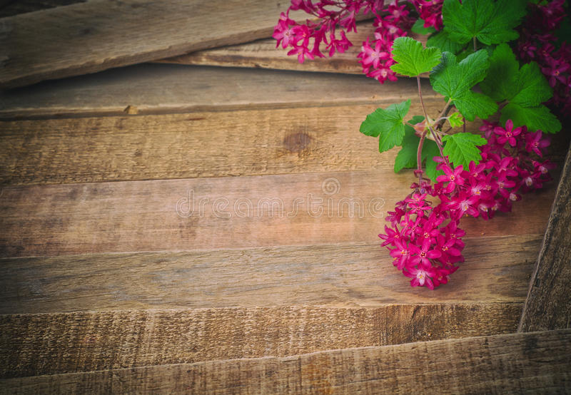 Download Currant Blossoms On Rustic Wood Background Stock Photo