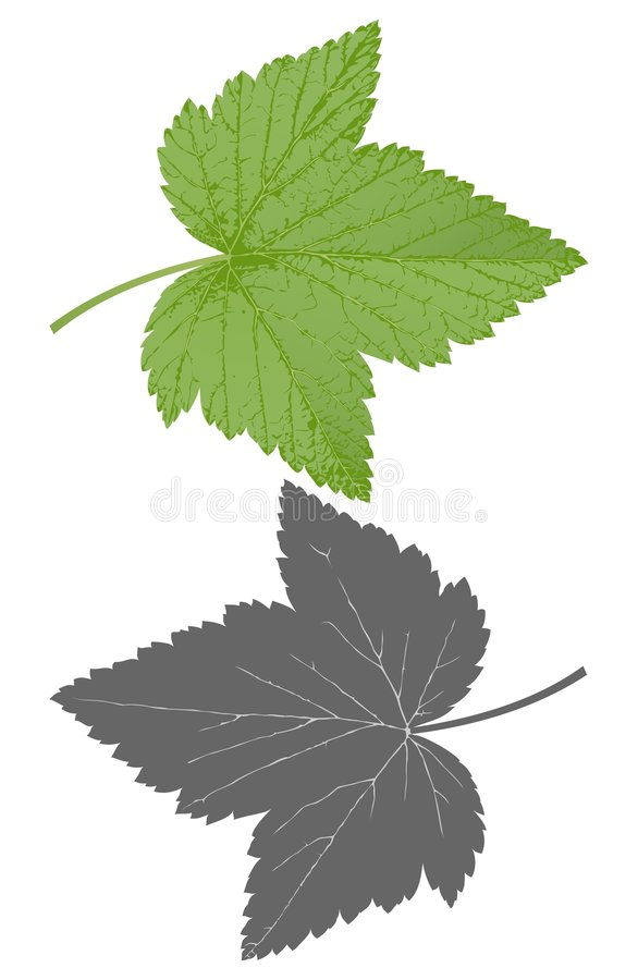 Download Currant leaf stock vector. Image of vitamin, leaf, season - 4692084