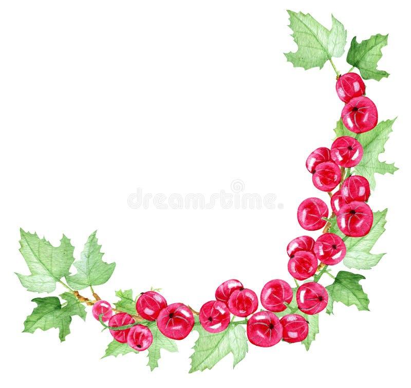 Currant red and currants leaf. Corner frame vector illustration