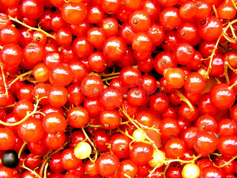 Currants 1 Stock Image