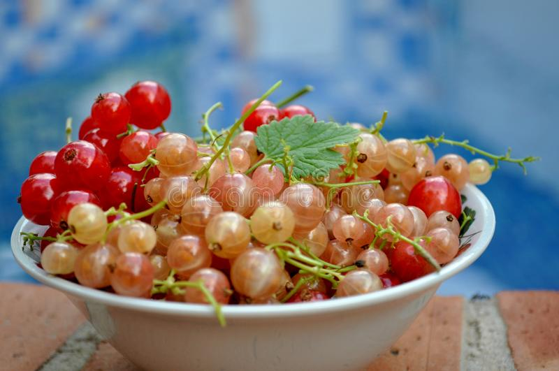 Currants dish near the pool. Currants bowl next the pool in a stillife for summer time royalty free stock images