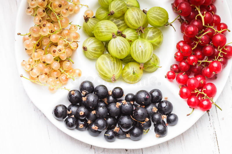 Currants and gooseberry stock photography