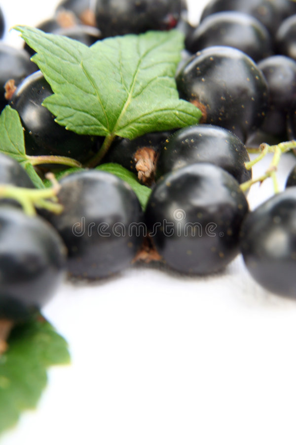 Free Currants Isolated In White Stock Photo - 2908720